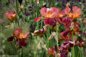 Chelsea Flower Show May14-45