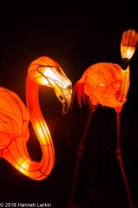 Chiswick House Chinese Lantern Festival Feb16-10