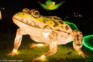 Chiswick House Chinese Lantern Festival Feb16-11
