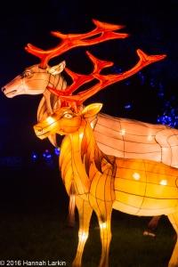Chiswick House Chinese Lantern Festival Feb16-4