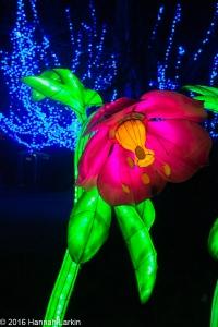Chiswick House Chinese Lantern Festival Feb16-6