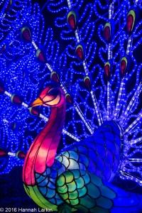 Chiswick House Chinese Lantern Festival Feb16-8