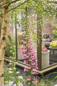 Chelsea Flower Show May2016-19