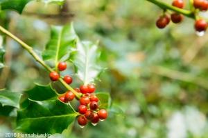 autumn-colours-12