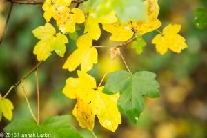 autumn-colours-18
