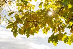 autumn-colours-2