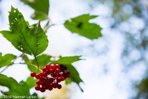 autumn-colours-22
