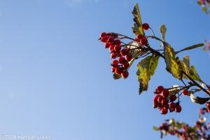 autumn-colours-3
