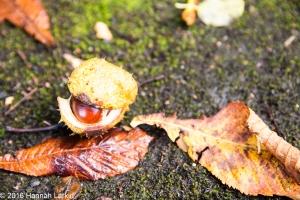 autumn-colours-31