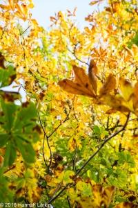 autumn-colours-32