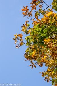 autumn-colours-33