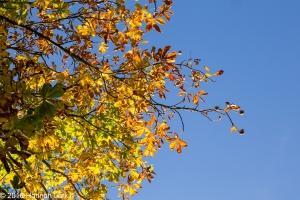 autumn-colours-35