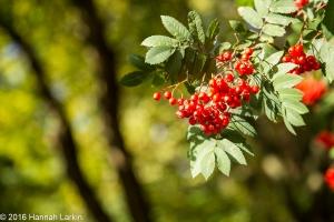 autumn-colours-4