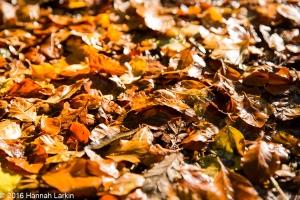autumn-colours-40