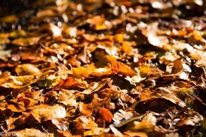 autumn-colours-41