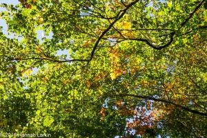 autumn-colours-43