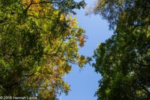 autumn-colours-47