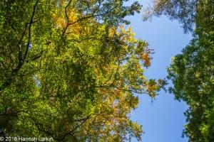 autumn-colours-48
