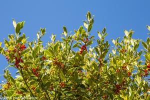 autumn-colours-51