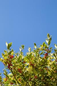 autumn-colours-52