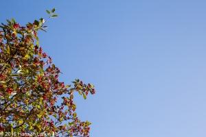 autumn-colours-7